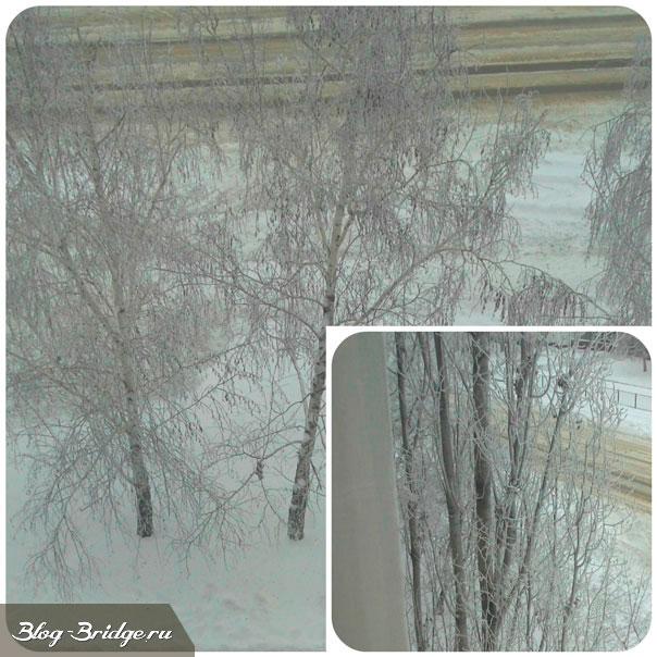зимние-деревья