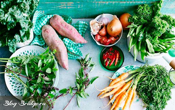 вегетарианство-вред-или-польза
